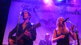 Runaway man - Common Linnets in Cologne