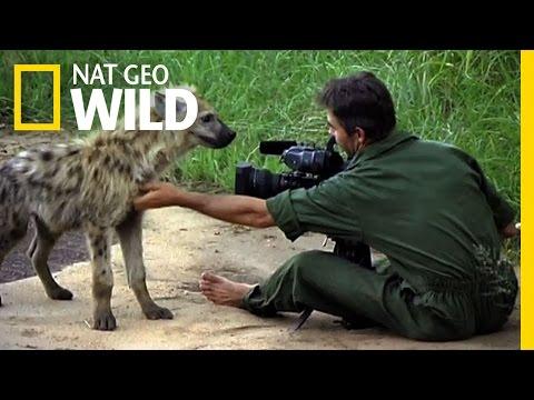 Inside the Hyena Feast | Nat Geo Wild