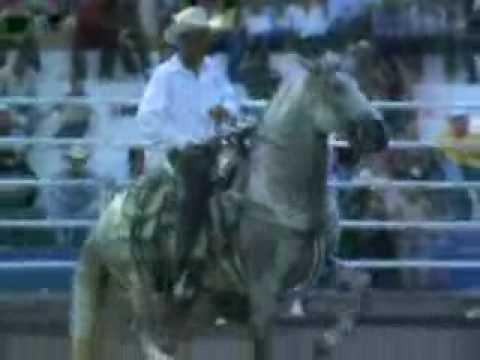 concurso de caballo bailador en la candelaria