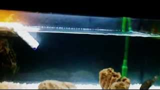 200 liter RES turtle tank