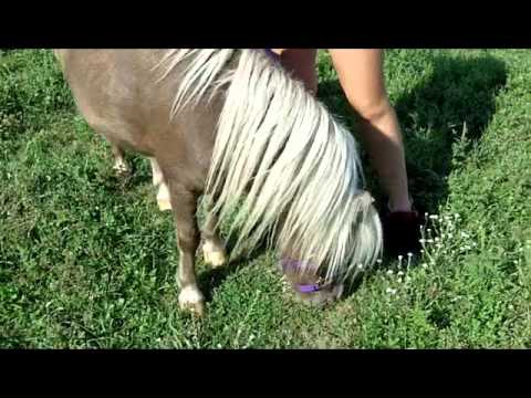 Mini Horse Jumping Extras