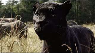 The Jungle Book Official Teaser Trailer #1 2016   Scarlett Johansson, Bill Murray Movie HD