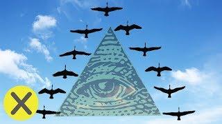 """¿Por qué los pájaros vuelan en forma de """"V""""? (PyR)"""