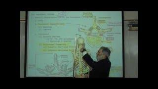 THE VERTEBRAL COLUMN & RIB CAGE by Professor Fink