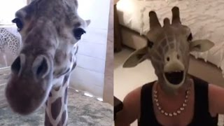 39-Week Pregnant Mom-To-Be Wears Mask Spoofing Expecting Giraffe Named April
