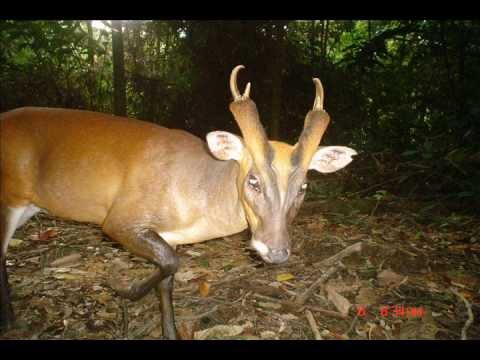 WWF Malaysia Camera Trap Photos from Wildlife Monitoring Unit WMU