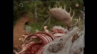 Marabunta: Vraždiace mravce (1998)