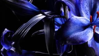 BOOM BOOM SATELLITES 『BLIND BIRD』