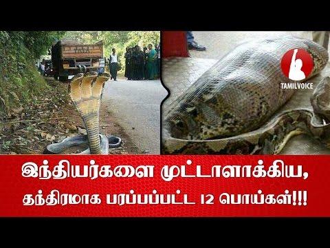 இந்தியர்களை முட்டாளாக்கிய, தந்திரமாக பரப்பப்பட்ட 12 பொய்கள்!!! - Tamil Voice