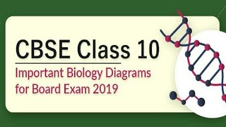 CBSE Class 10: Download Important Biology Diagrams for Board Exam 2019
