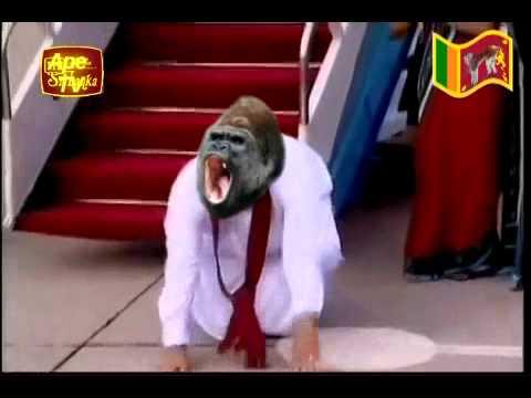 Sri lanka latest news mahinda moda arrived in Sri Monkey funny