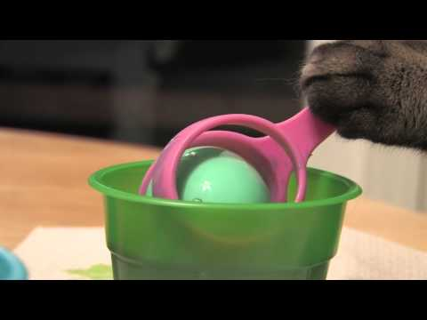 Cat Coloring Easter Eggs