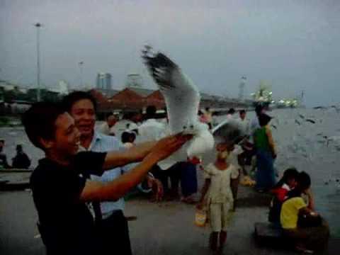 Xxx Mp4 Man Catches Flappy Bird Seabird With His Bare Hand Yangon River Myanmar 3gp Sex