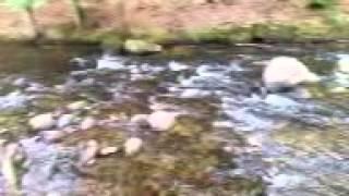 Beautiful wild life river