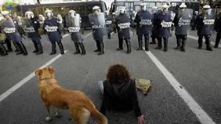 L'incroyable chien des émeutes en Grèce