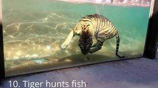 Top 10 Ultra HD Visually Stunning Animal Hunt Episodes Caught On Camera