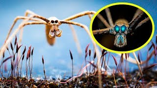 THE RAREST SPIDERS In The World
