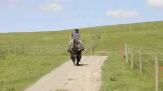 Cowboy on Buffalo