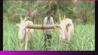 Telangana Formation Day Celebrations | Telangana Special Song | Suswara Song