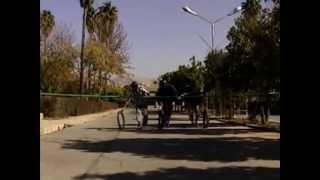 بخشی از کلیپ هفته خوابگاه ها - دانشگاه صنعتی شیراز
