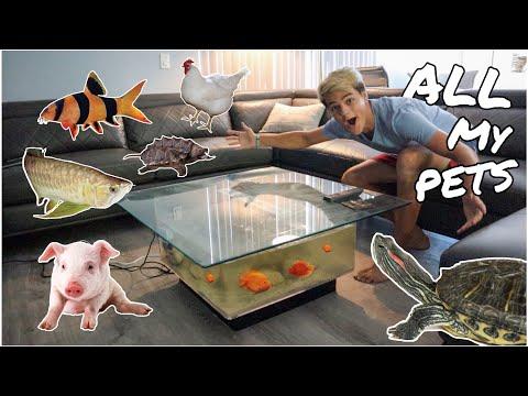 ALL My ANIMALS in One Video FEEDING