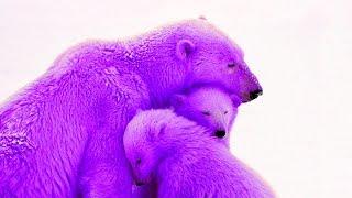 8 حيوانات لديهم ألوان غريبة و عجيبة , لن تصدق أنهم موجودين حقاً .. !!