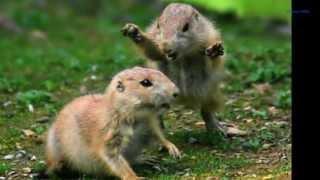 I'm a NUT !!! ... Roger Miller or Leroy Pullins?