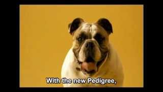 Spanish Pedigree Ad with English Subtitles