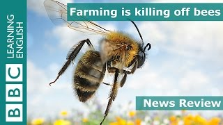 News Review: Farming is killing off bees