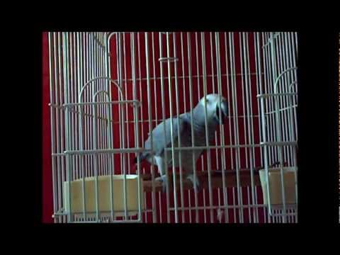 perroquet speaking animal