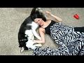 Download Video Download DOG VS GIRLFRIEND!! 3GP MP4 FLV