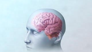 Brain and Mental Health   Nucleus Health
