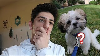 What REALLY happened to my new dog..?