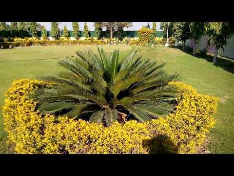 215 - My friend RAKA'S BEAUTIFUL GARDEN (Hindi /Urdu) 17/12/16