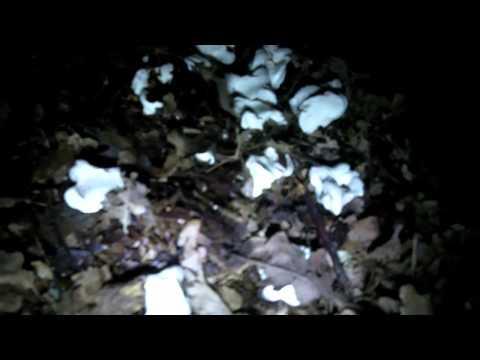 Video 31 - HAPPY BIRTHDAY SWEET KAREN XXX