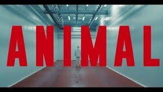 ANIMAL TRAILER - Dirigido por Armando Bo / Guillermo Francella - Carla Peterson.