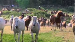 EATON'S RANCH Wyoming - MORNING WRANGLE