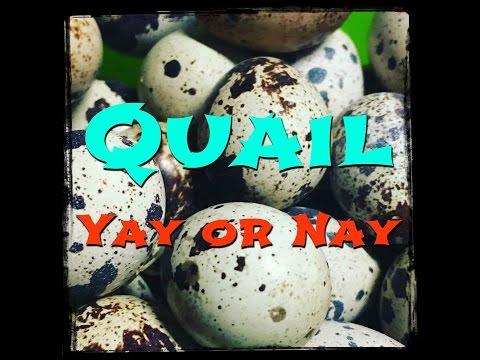 QUAIL Yay or Nay