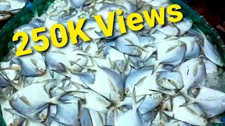 Biggest Fish Market In Chittagong Bangladesh [ Fisheri Ghat ]