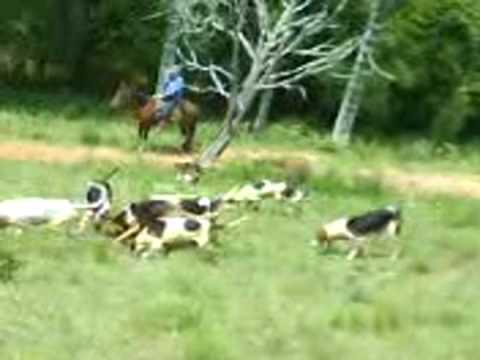 caçada de veado