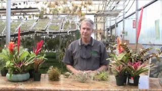 Rainforest Flora Nursery Plant Education 101 - Episode 3