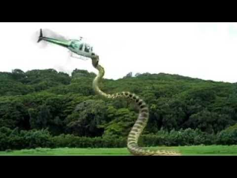 Xxx Mp4 Most Dangerous Snake Of The World Attacks Aeroplane 3gp Sex