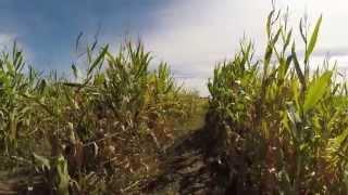 Maize Runner