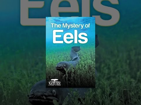 Xxx Mp4 Nature The Mystery Of Eels 3gp Sex