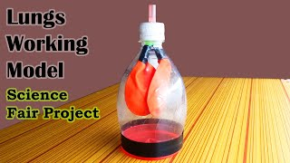 How to Make Lungs Model, Science Models and Science Fair Projects for 7th Grade