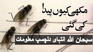 Why Allah Created Bee | Allah ne Makhi Kyun Paida ki