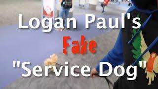 Logan Paul's fake Service Dog