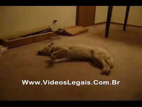 Cachorro sonâmbulo do CQC