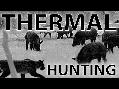 Best Thermal Night Hunting Videos with the REAP IR