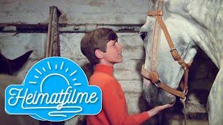 Heintje | Mamatschi, schenk' mir ein Pferdchen | Ein Herz geht auf Reisen | 1969 HD